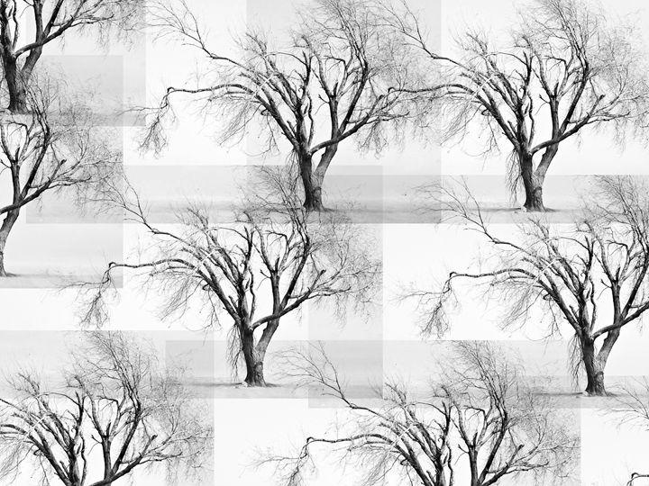 Hidden Grove - Parker Tawzer