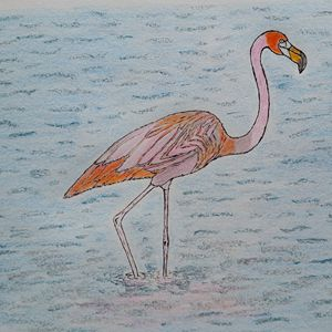 Flamingo Bird - Amitava0112