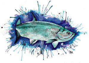 Tarpon Watercolor