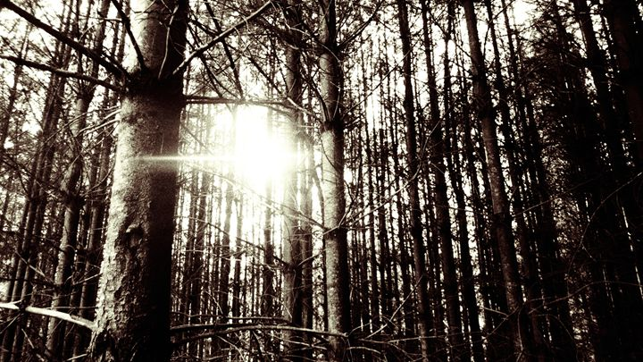 Appalachian Trail Series - Joe Chambers