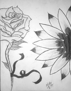 Ribbons & Rose