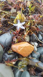 Star Fish On The Seashore
