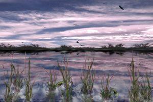 Buzzard Swamp