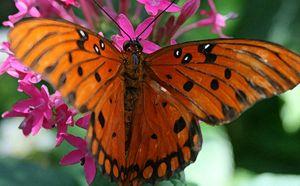 Wings of Splendor
