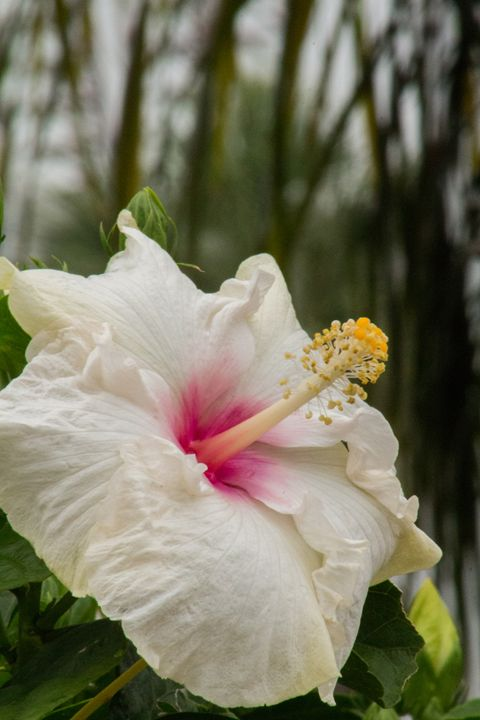Coastal Flower - Casey Tabor