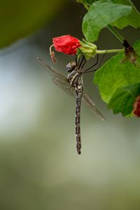 Dragonfly Prayers