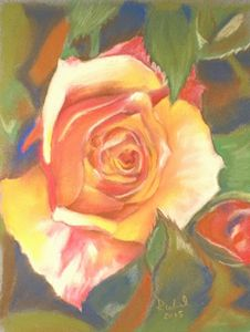 Colors of Rose