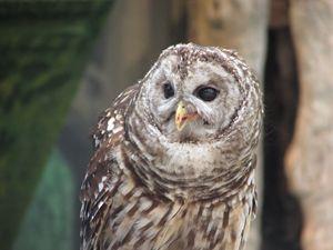 Owl Smiling