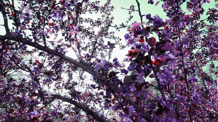 Garden of Everything - Julie Maxwell