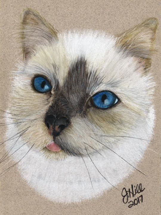 Pastel Cat - Sketchedout12