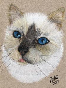 Pastel Cat