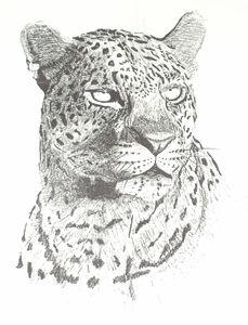 Leopard - PlokimjuArt