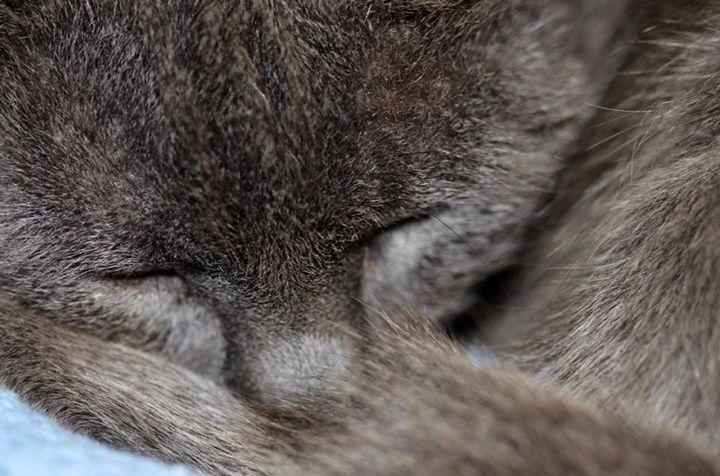 Soft Kitty, Warm Kitty... - eJAY