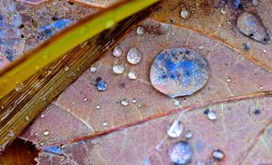 Raindrop Blue