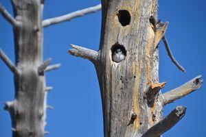 Tree with Bird Hole Nest - Mark Scott Thompson