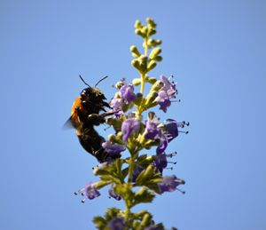BumbleBee Lunch Time - Timeless Art On Canvas