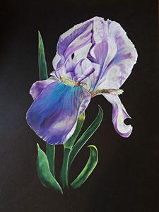 Iris - David Neace Artist
