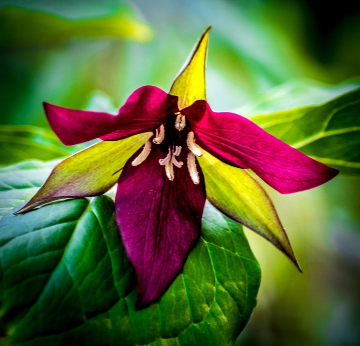 Wildflower along the Brandywine - Joe Campbell's Photo Art Gallery