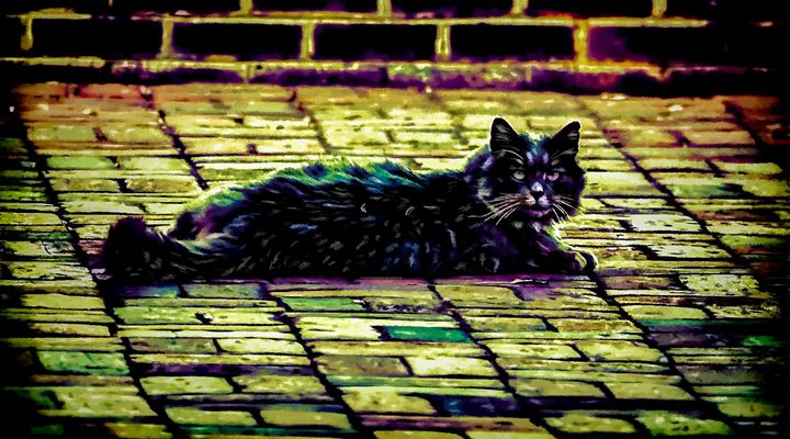 Party Cat - Joe Campbell's Photo Art Gallery