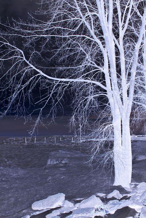 Winter Tree - A UniQUE Perspective