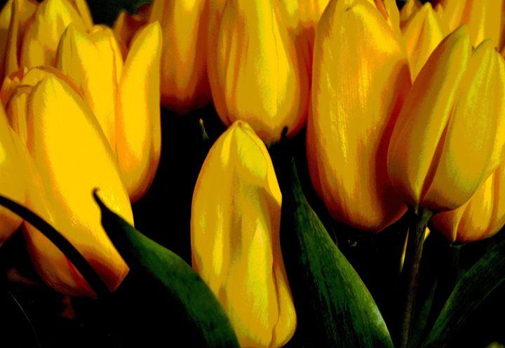Tulips - A UniQUE Perspective