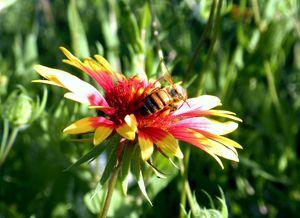 Pollination Series #2