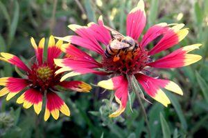 Pollination Series #1