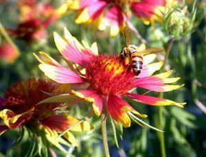 Pollination Series #4