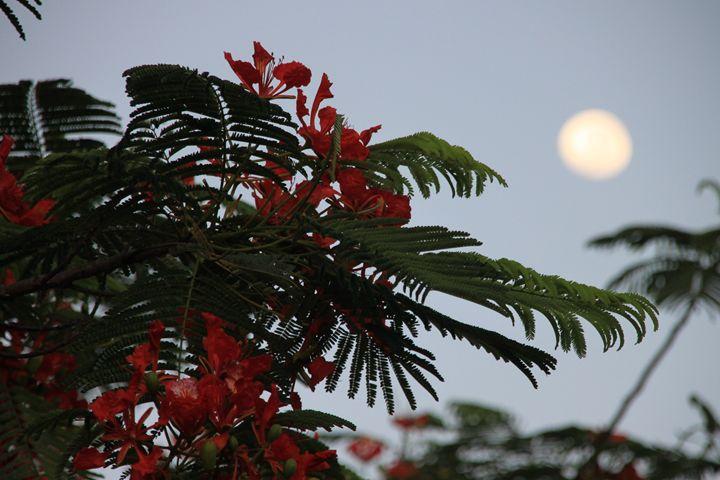 Treetop and moon - Nicole Huddleston Vibrational Art