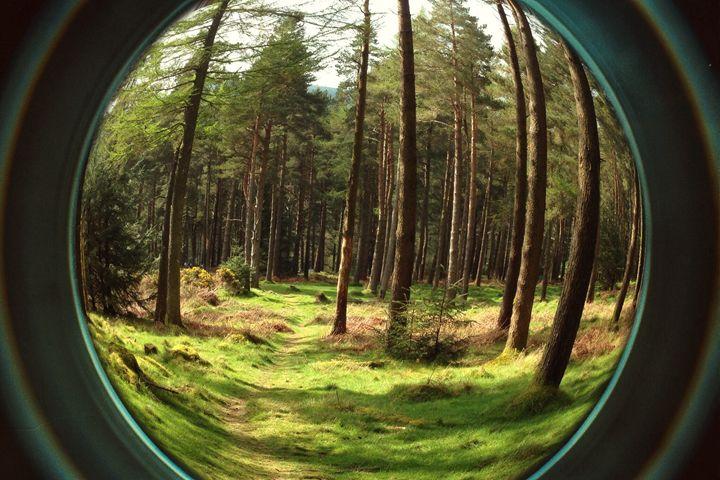 Forest - Aga