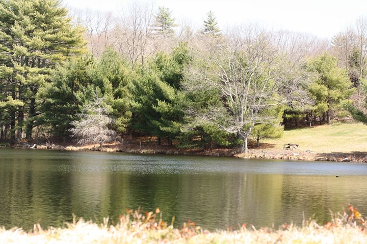 overlooking the pond - Elizabeth Manning