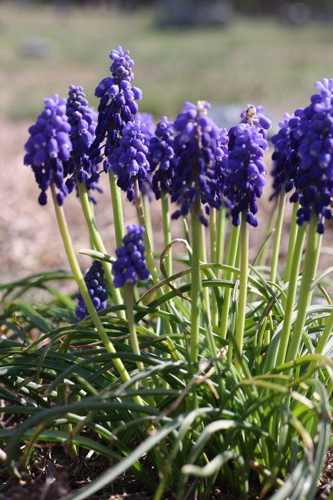 purple flowers - Elizabeth Manning