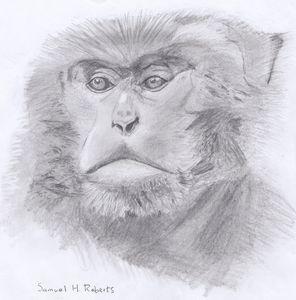 Formosan Macaque - Samuel H. Roberts