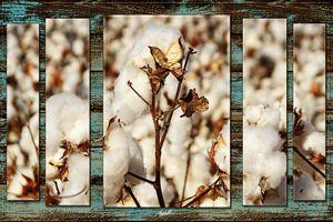 Bloomin' Cotton