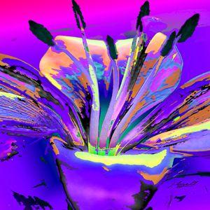 Lily Pop Purple - j.lazell