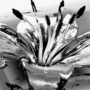 Lily Pop Monochrome - j.lazell