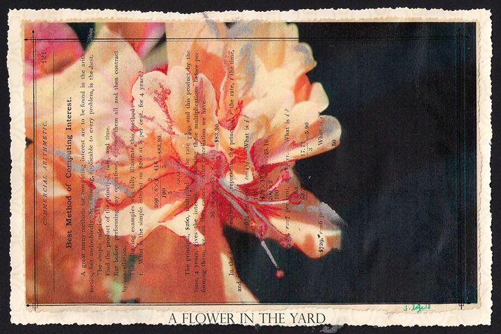 A FLOWER IN THE YARD - j.lazell