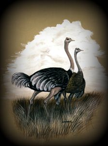 a couple of ostriches - wildlife in watercolor