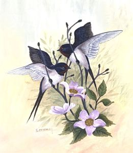 Barnswallows - wildlife in watercolor