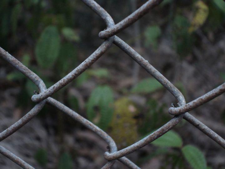 Fenced-Off Forest - Kirin K