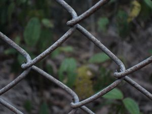 Fenced-Off Forest