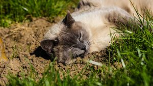 Cat almost sleeping under the Sun