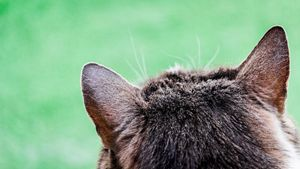 Cat portrait from behind