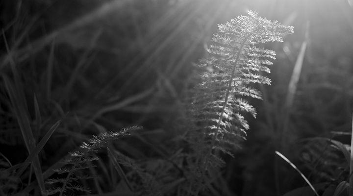 Morning Fern - PhilabaumPhotograghy