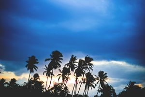 Palmtrees in the sunset