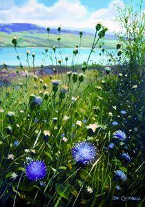 Irish Thistles and Wild Flowers