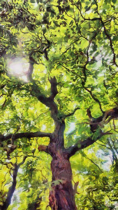 Blooming beech - Luke Walker
