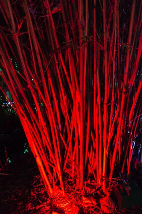 Bambo Red Uplit - David J Riffey