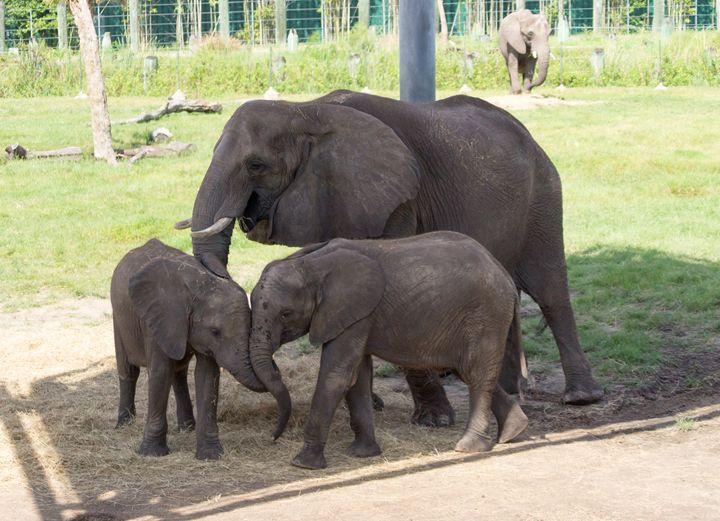 Happy Elephant Family - David J Riffey