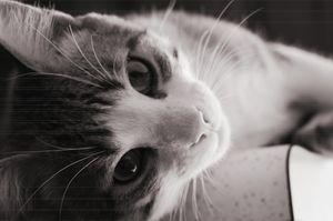 Lazy Kitten